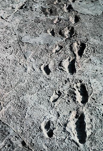 Evolution of consciousness: laetoli footprints