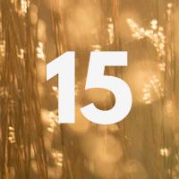 Curiosity Calendar #15
